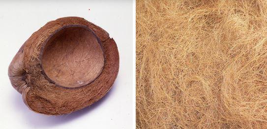 fibres de coco
